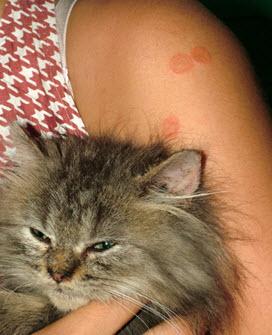 สธ.เตือนผู้เลี้ยงแมว ระวังติดกลากแมว