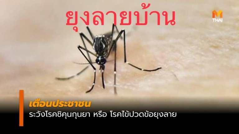 โรคไข้ปวดข้อยุงลายหรือโรค Chikungunya ชิคุนกุนยา